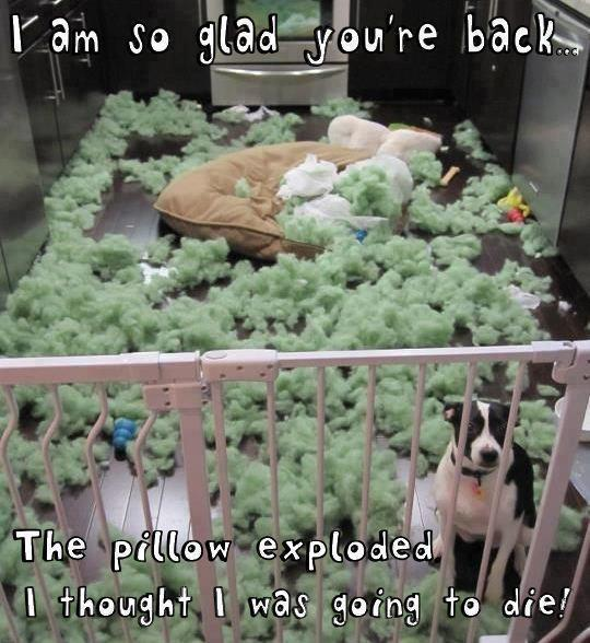 Im so glad your back - the pillow exploded I thought I was going to die.jpg