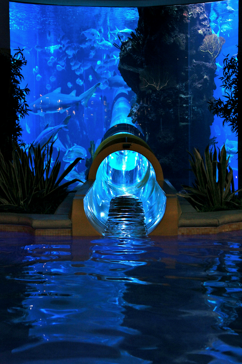 awesome water slide.png