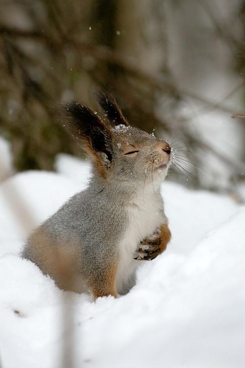 dramatic squirrel.jpg