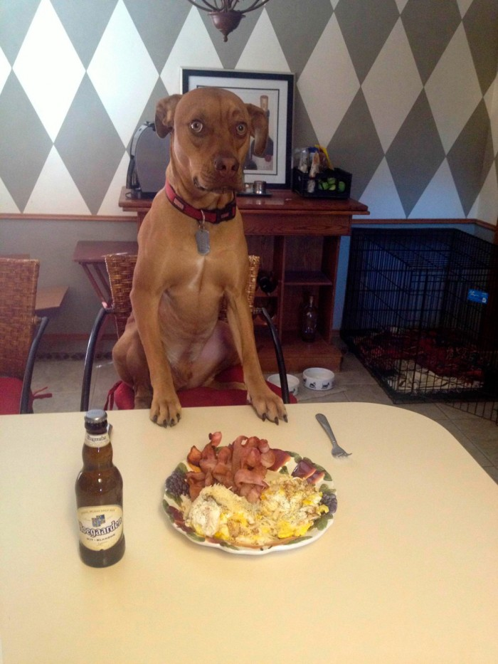 dog breakfast.jpg