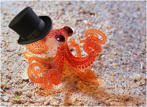 gentleman octopus.jpg