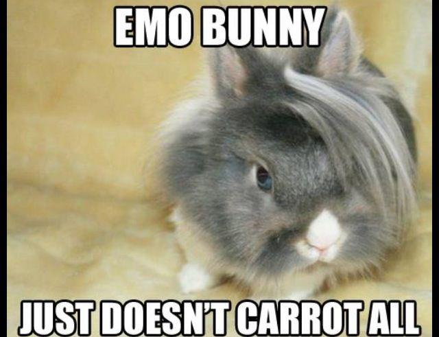 emo bunny emo bunny Humor forum fodder Cute As Hell Animals