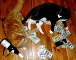 money cat 12 150x118 money cats lolcats Humor