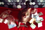 money cat 13 150x100 money cats lolcats Humor