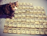 money cat 15 150x117 money cats lolcats Humor