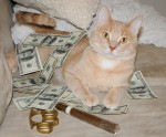 money cat 17 150x124 money cats lolcats Humor