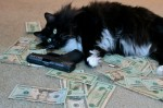 money cat 18 150x99 money cats lolcats Humor