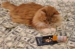 money cat 19 150x99 money cats lolcats Humor