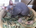 money cat 2 150x119 money cats lolcats Humor