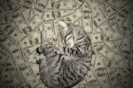 money cat 20 150x100 money cats lolcats Humor