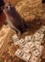 money cat 22 150x206 money cats lolcats Humor