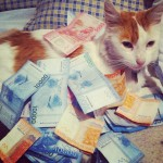 money cat 24 150x150 money cats lolcats Humor