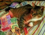 money cat 25 150x116 money cats lolcats Humor