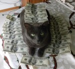 money cat 7 150x137 money cats lolcats Humor