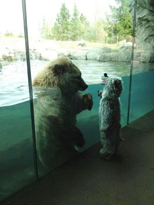 polar bear vs polar bear kid polar bear vs polar bear kid Humor Cute As Hell Animals