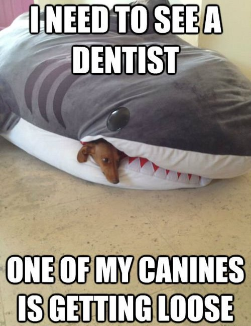 I need to see a dentist - one of my canines is getting loose.jpg