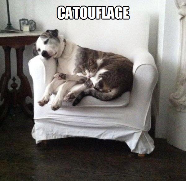 catouflage.jpg