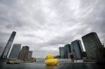 florentijn hofmans floating duck sculpture 130502 150x98 rubber duckie in hong kong harbour bizarre