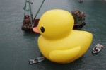 florentijn hofmans floating duck sculpture 20130502 000414 630 150x99 rubber duckie in hong kong harbour bizarre