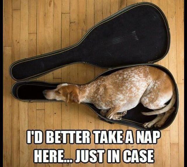 Better take a nap here.jpg