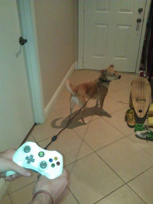 Pet Controller.jpg