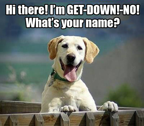 What's your name.jpg