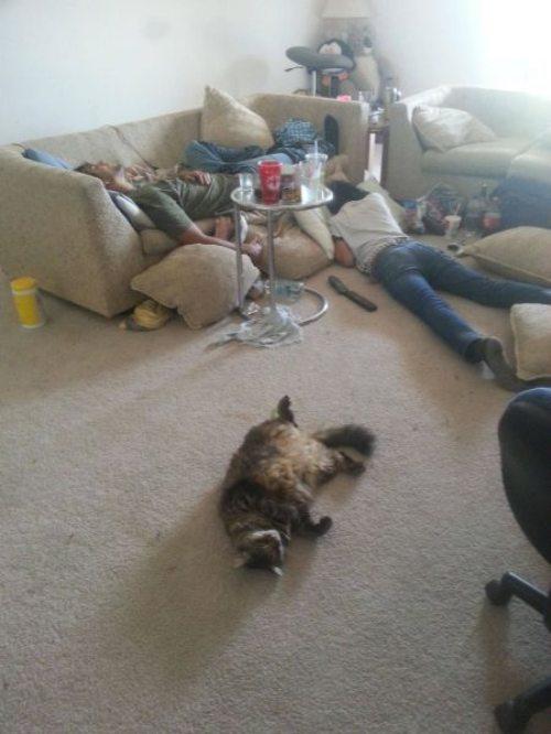 morning after cat.jpg