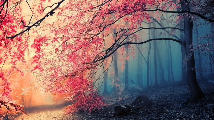 pink tree wallpaper.jpg