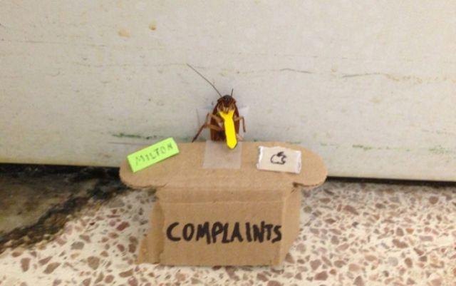 Bug Complaints.jpg