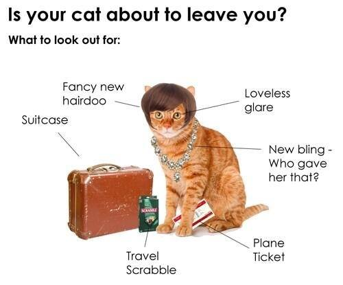 is your cat about to leave you.jpg