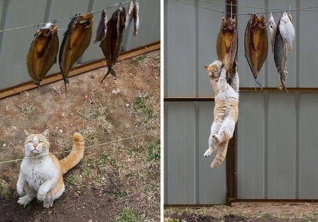 Cat vs fish line.jpg