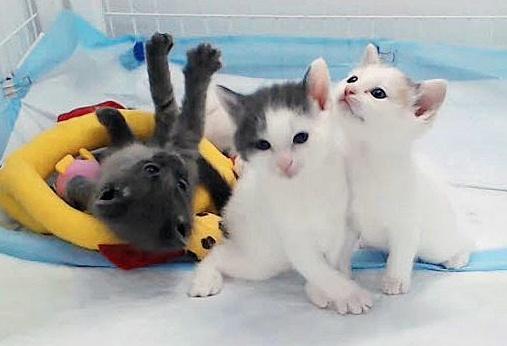 Kitten fall.jpg
