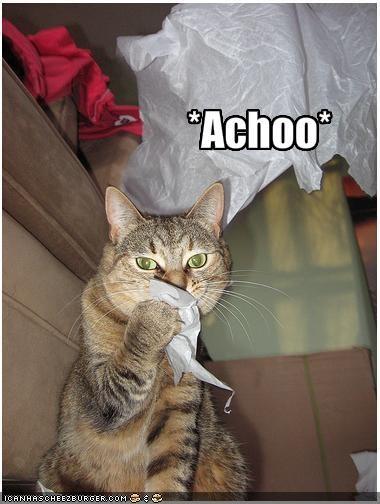 Kitty Sneeze.jpg