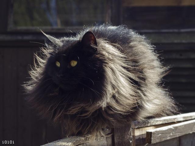 Pole Cat.jpg