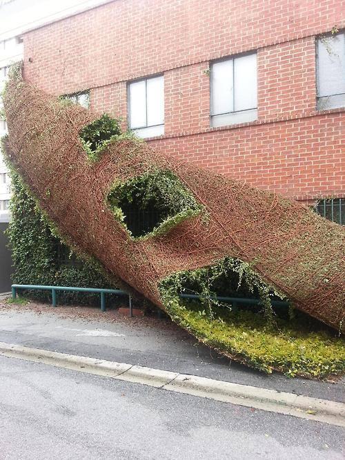 Wallclimbing Ivy Failure.jpg