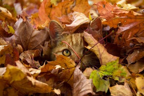 leaf Cat.jpg