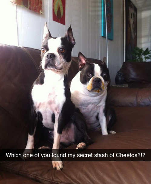 which one of you found my cheetos.jpg