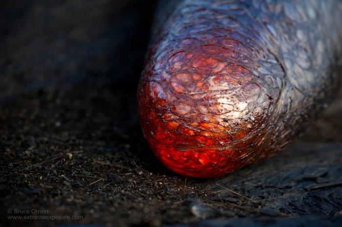Lava Finger by Bruce Omori.jpg