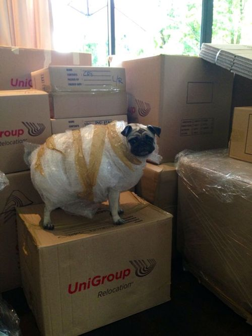 Pack your pug.jpg