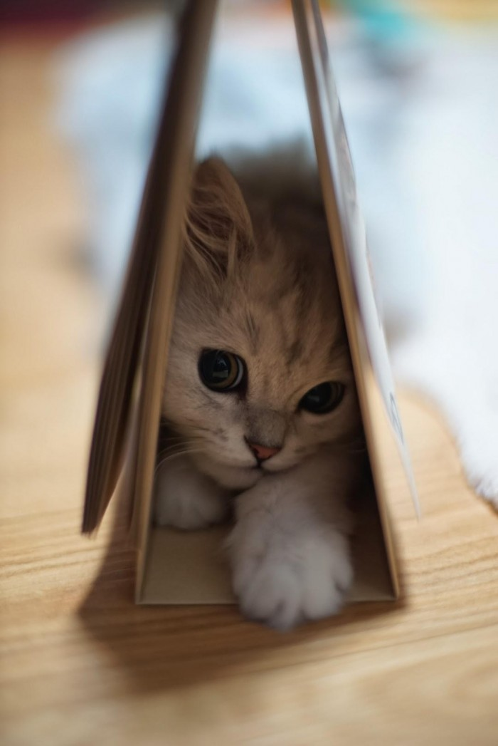 Kitten Trap.jpeg