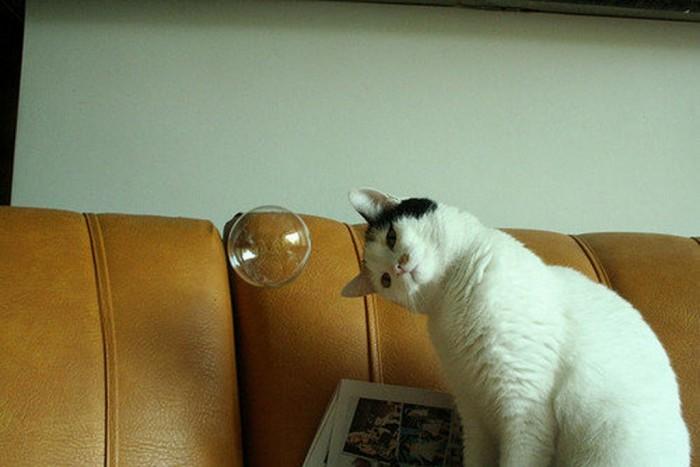 Mysterious Bubble.jpg