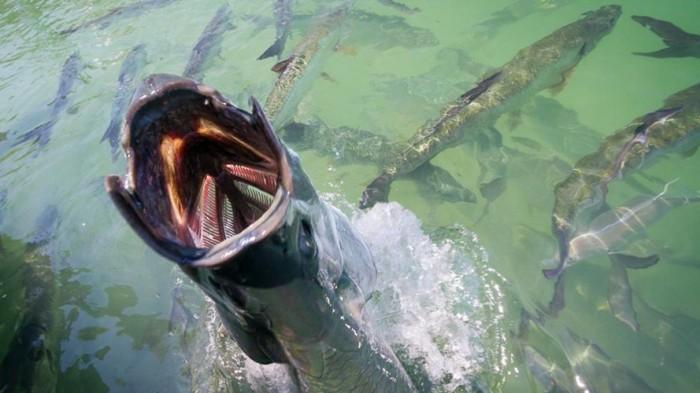 Nightmare Fish.jpg