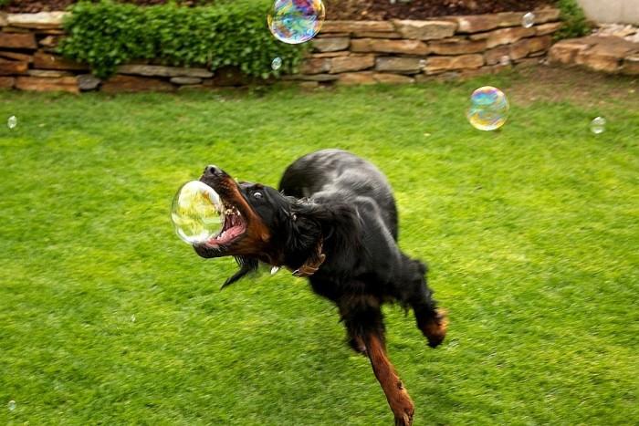 dogs love bubbles.jpg