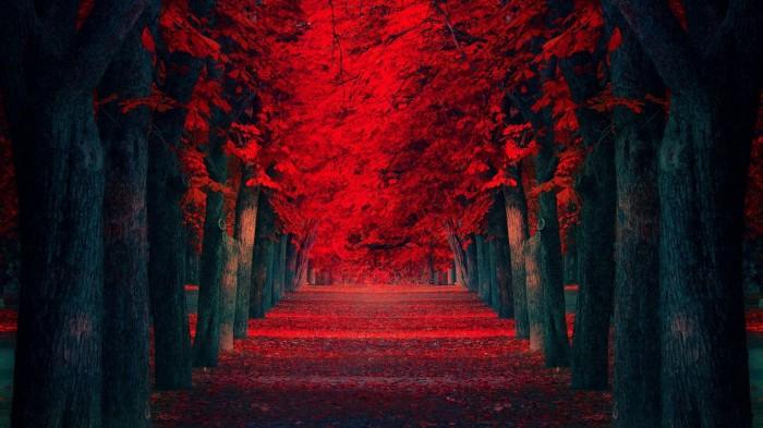 red path.jpg