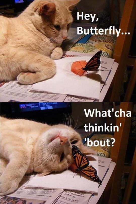 hey butterfly.jpg