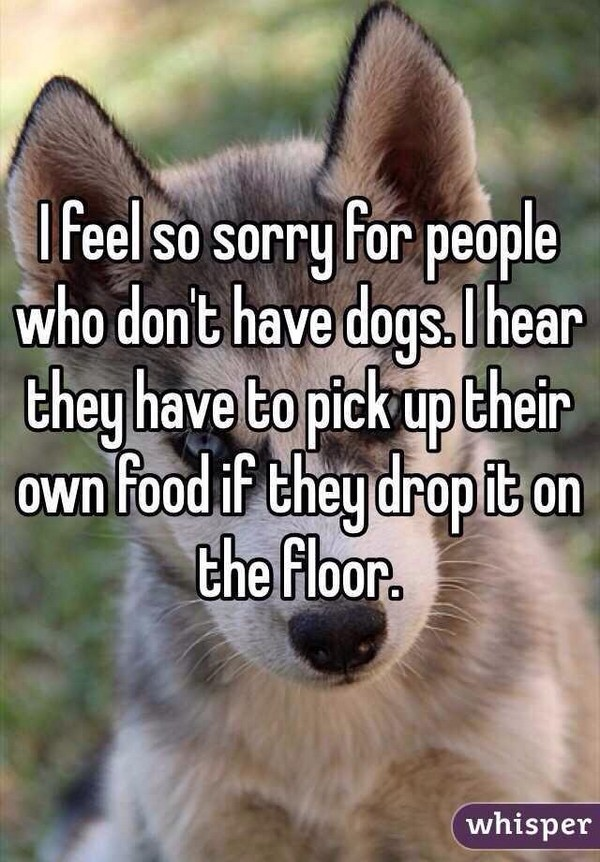 I feel sorry for people without dogs.jpg