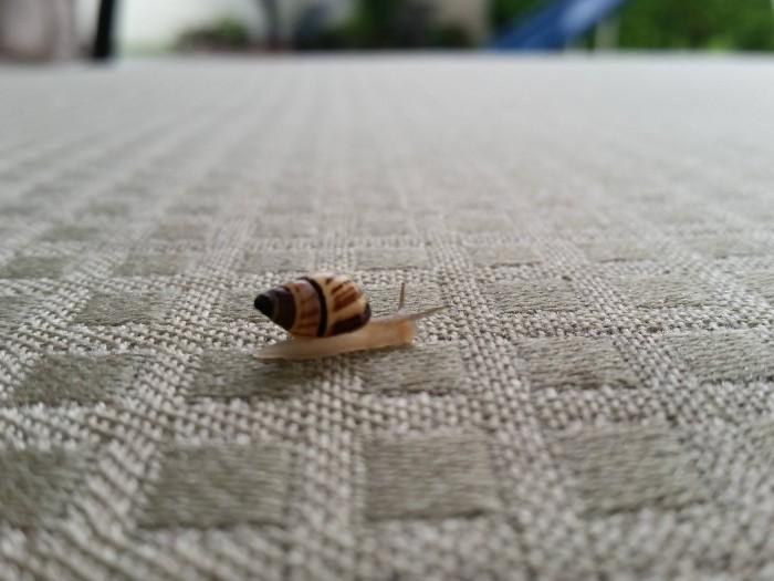 Snail Racer.jpg