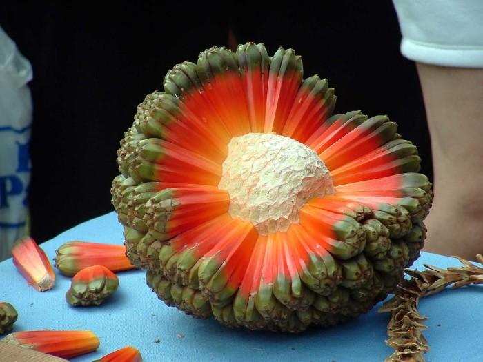 hala fruit.jpg