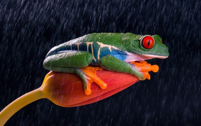 Smirky Frog.jpg