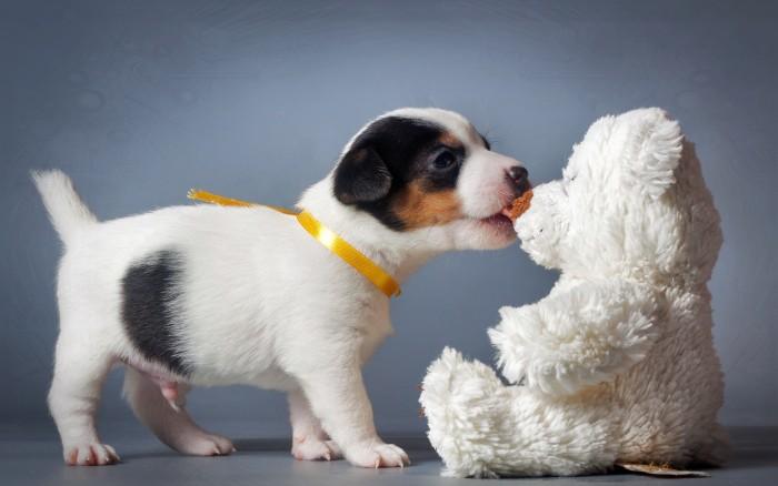 Vicious dog fight between dog and bear.jpg